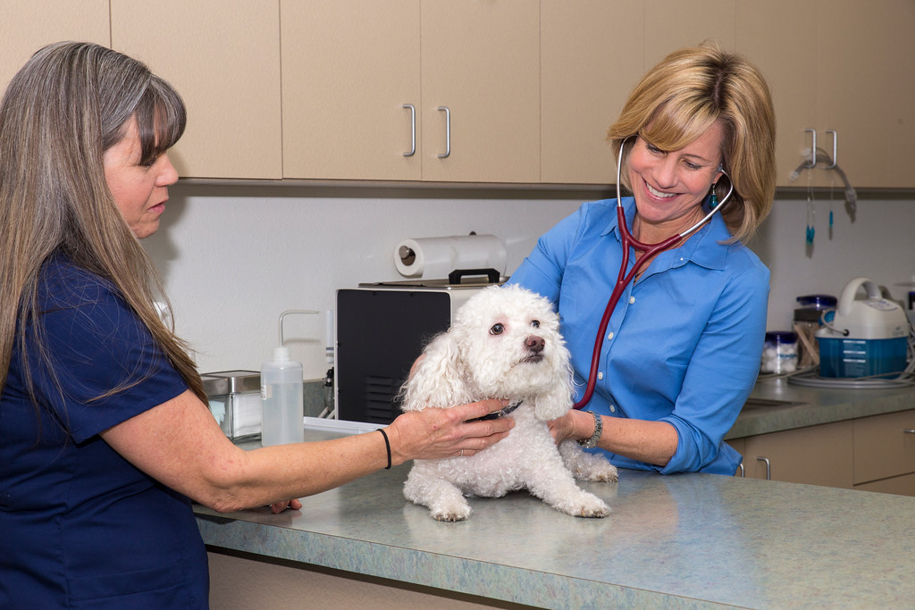 Dr. Marzke examining a patient at Topaz Veterinary Clinic in Tempe, AZ